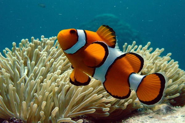 Great barrier reef information facts weather maps and more for Great barrier reef fish