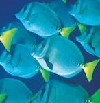 Whitsundays Reefworld Cruise 3