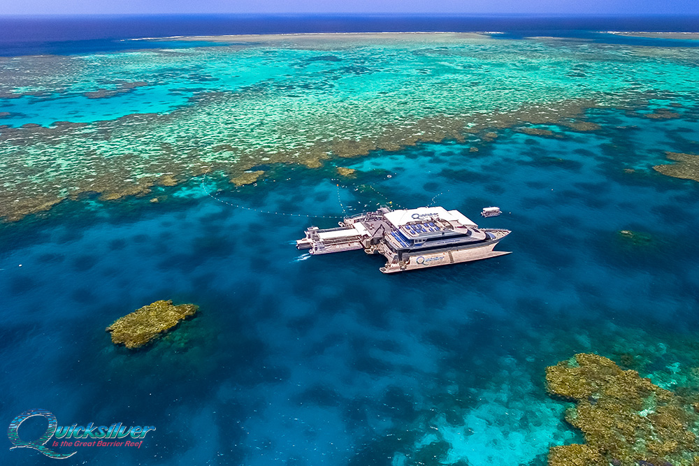 Best dive sites in the great barrier reef - Best place to dive the great barrier reef ...