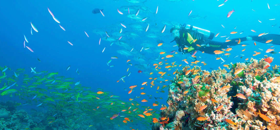 Great barrier reef australia tours accommodation info facts - Best place to dive the great barrier reef ...