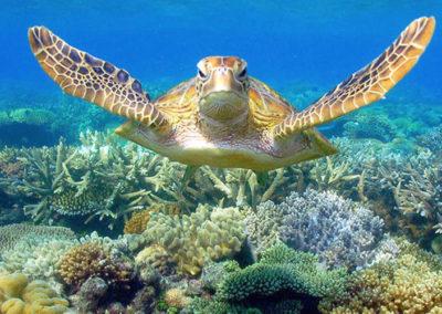 moore reef 2