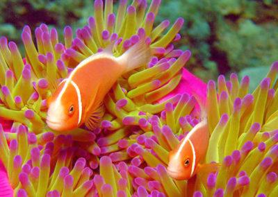 moore reef 4