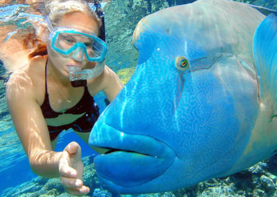 outer barrier reef snorkel cruise 1